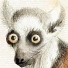 FeistyLemur