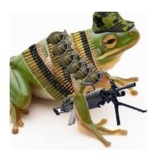 fearlessfrog